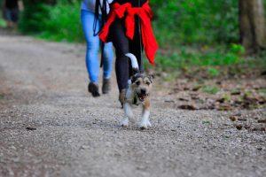 Mantrailingkurs in der Hundeschule München