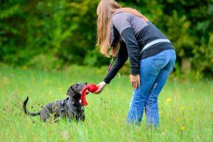 Hund beim Hundetraining in München