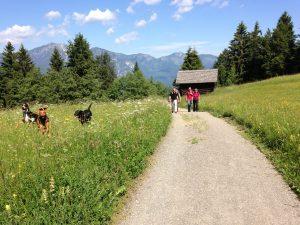 Hundeworkshop der Hundeschule München Neuried