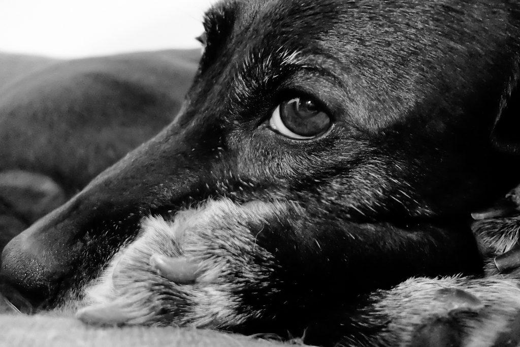 Hundepsychologie München
