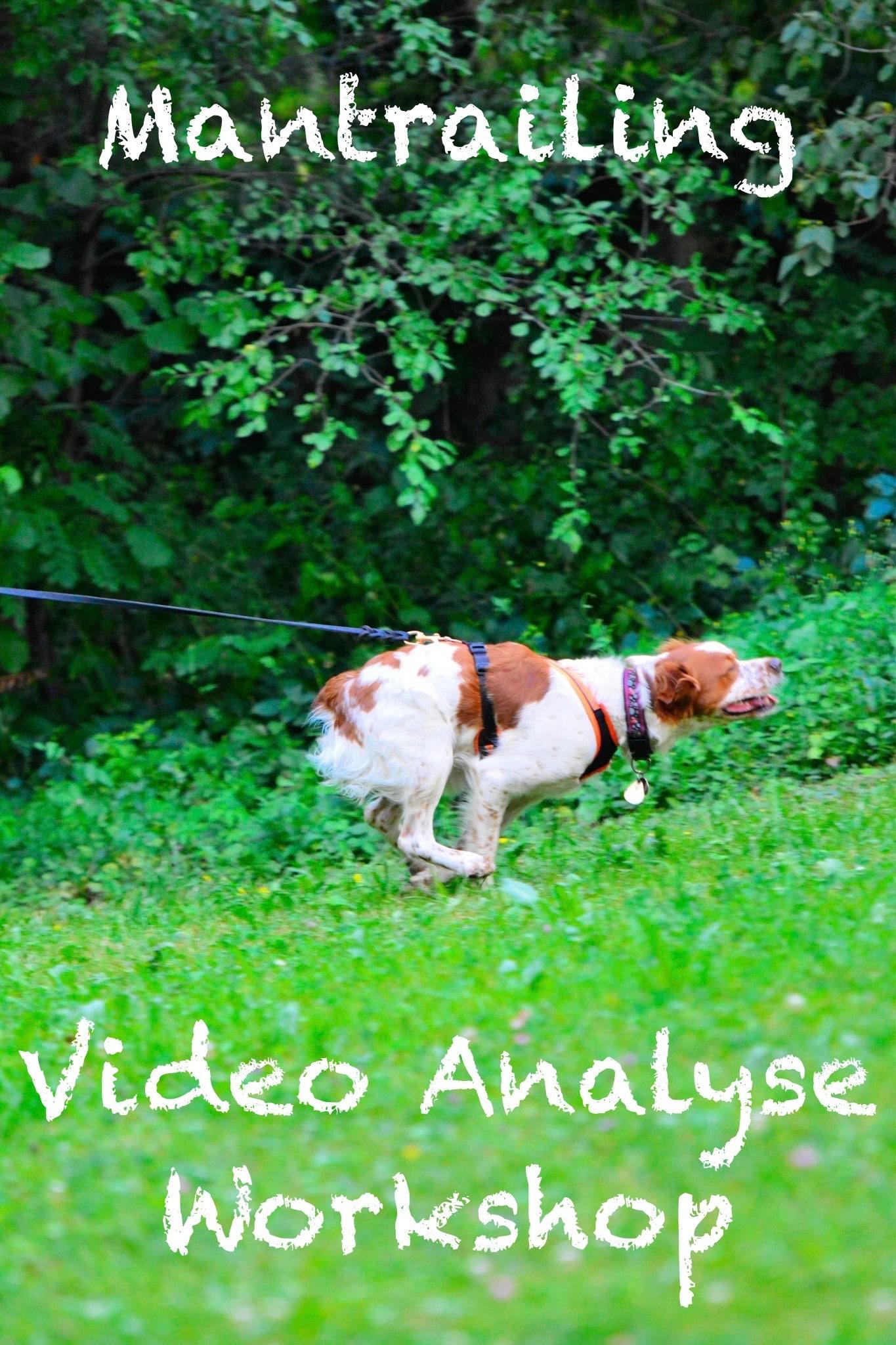 Mantrailing Videoanalyse Workshop