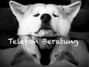 Telefonische Beratung durch die Hundeschule Hundi Training