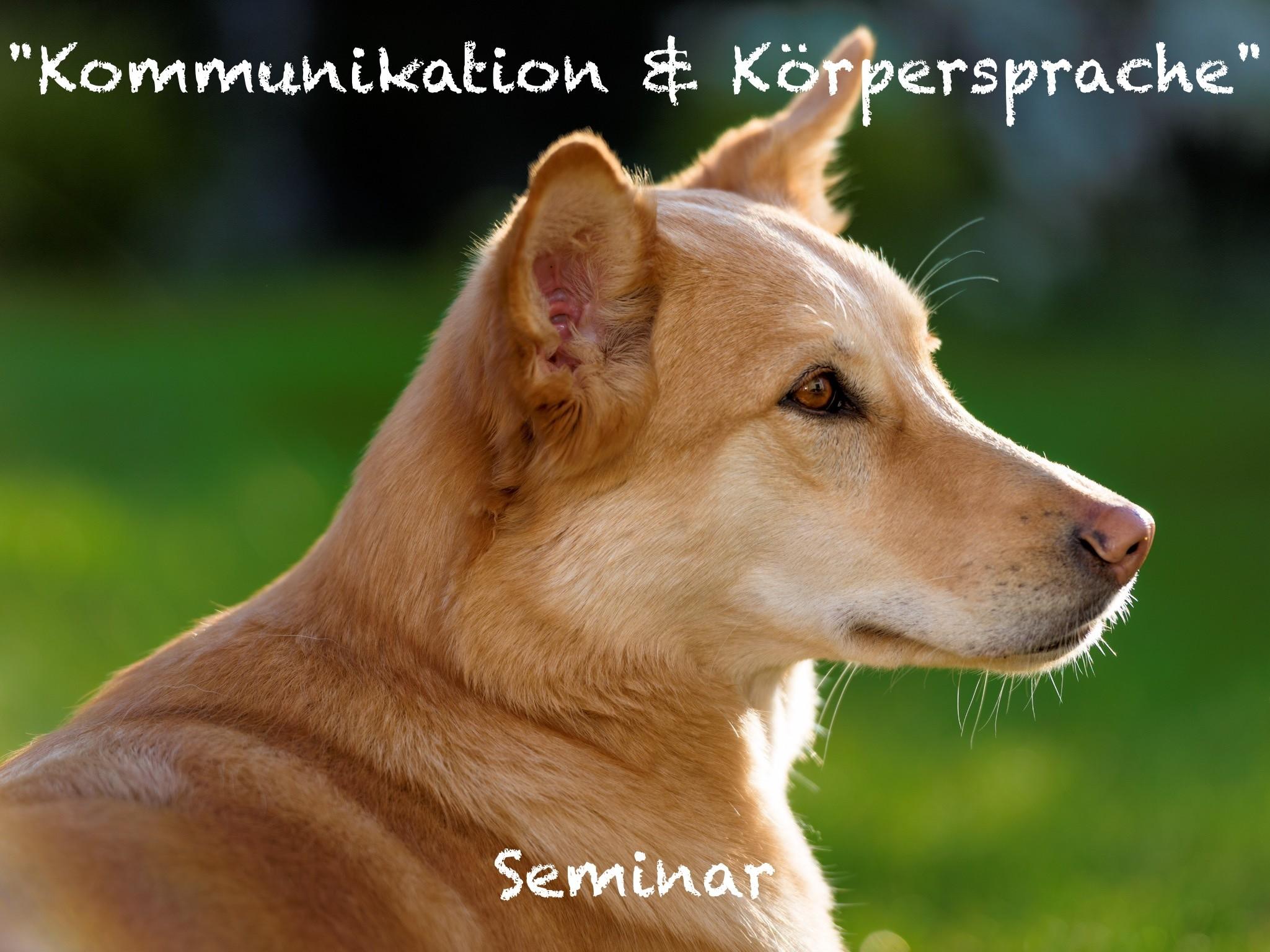 Seminar Kommunikation