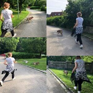 Die Hundeschule München bietet Mantrailing als Beschäftigung für Hunde an