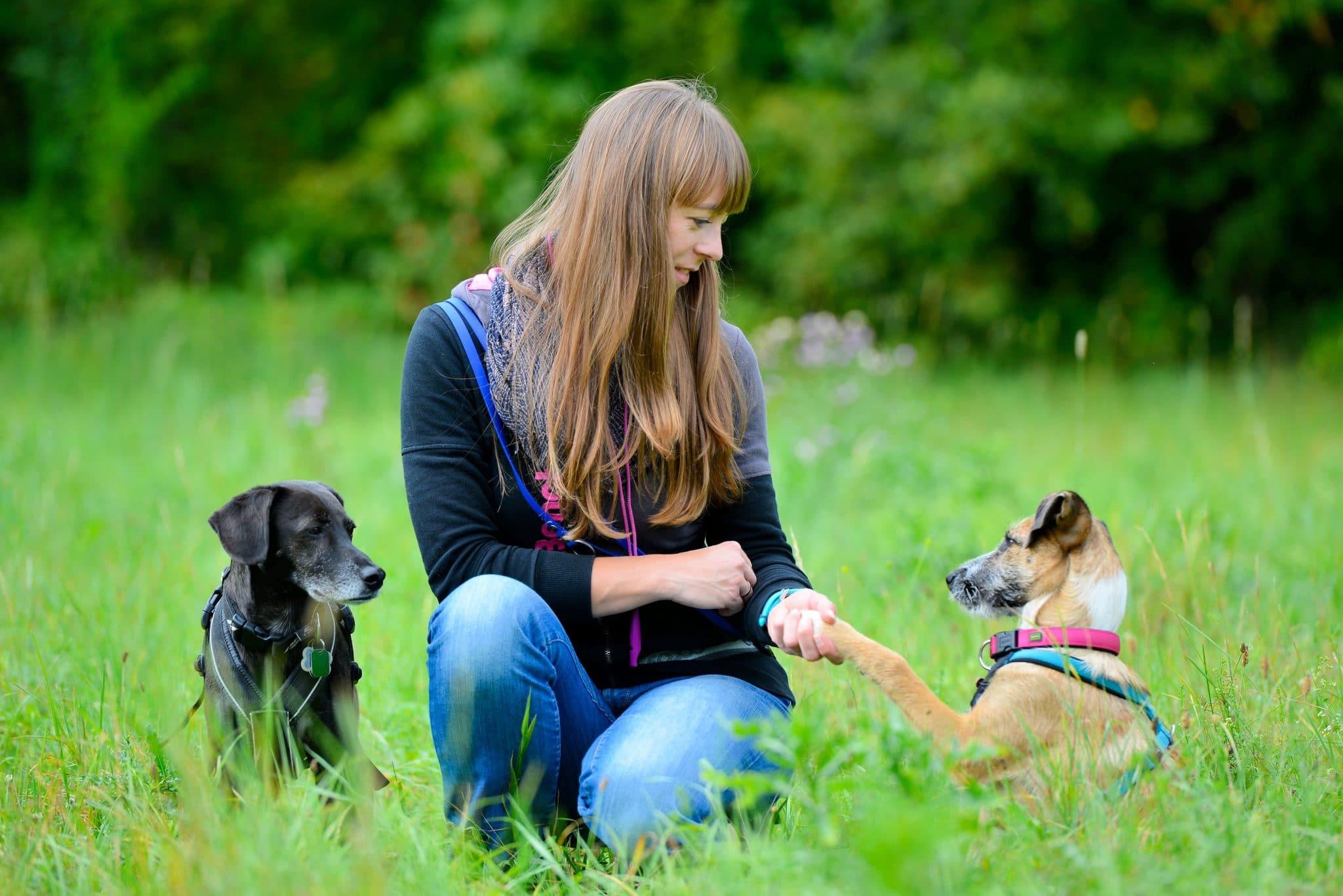 Hundi Training - zertifiziertes Hundetraining