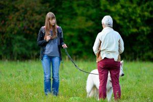 Hundeerziehung in der Hundeschule München Neuried