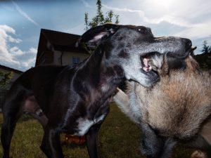 Hundeschule München Einzeltraining