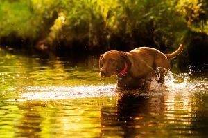 Die Hundeschule hilft auch bei Problemhunden
