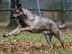 Anti-Jagd-Training in der Hundeschule München