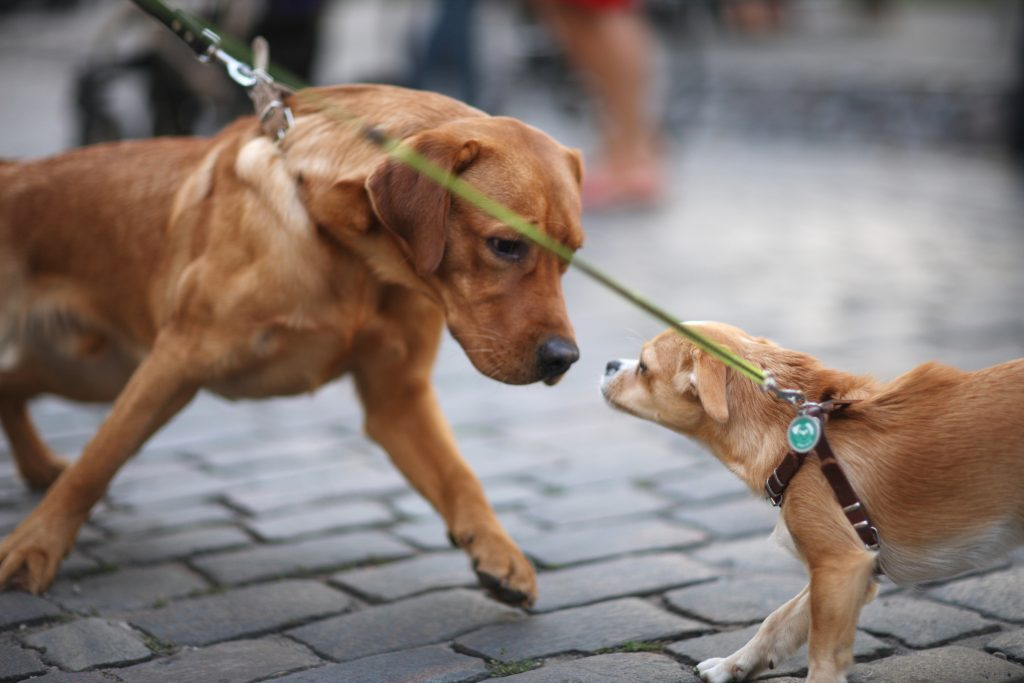 Hundebegegnung üben